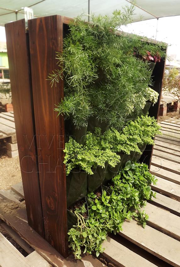 Cuadro vivo simple cuadro vegetal vivero chaclacayo for Que planta para muro exterior vegetal