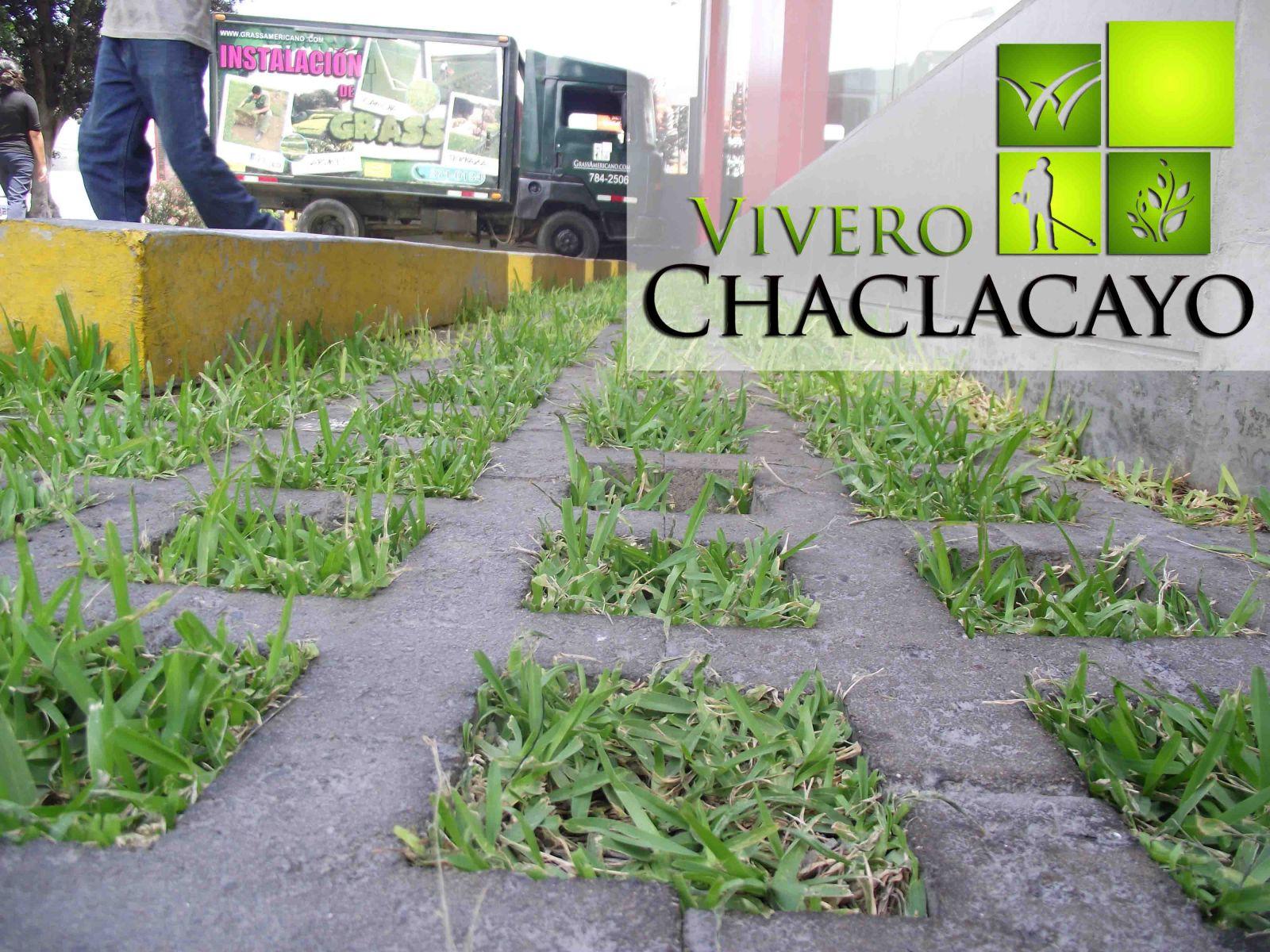 Poda de grass block michi san isidro vivero chaclacayo for Viveros en lima