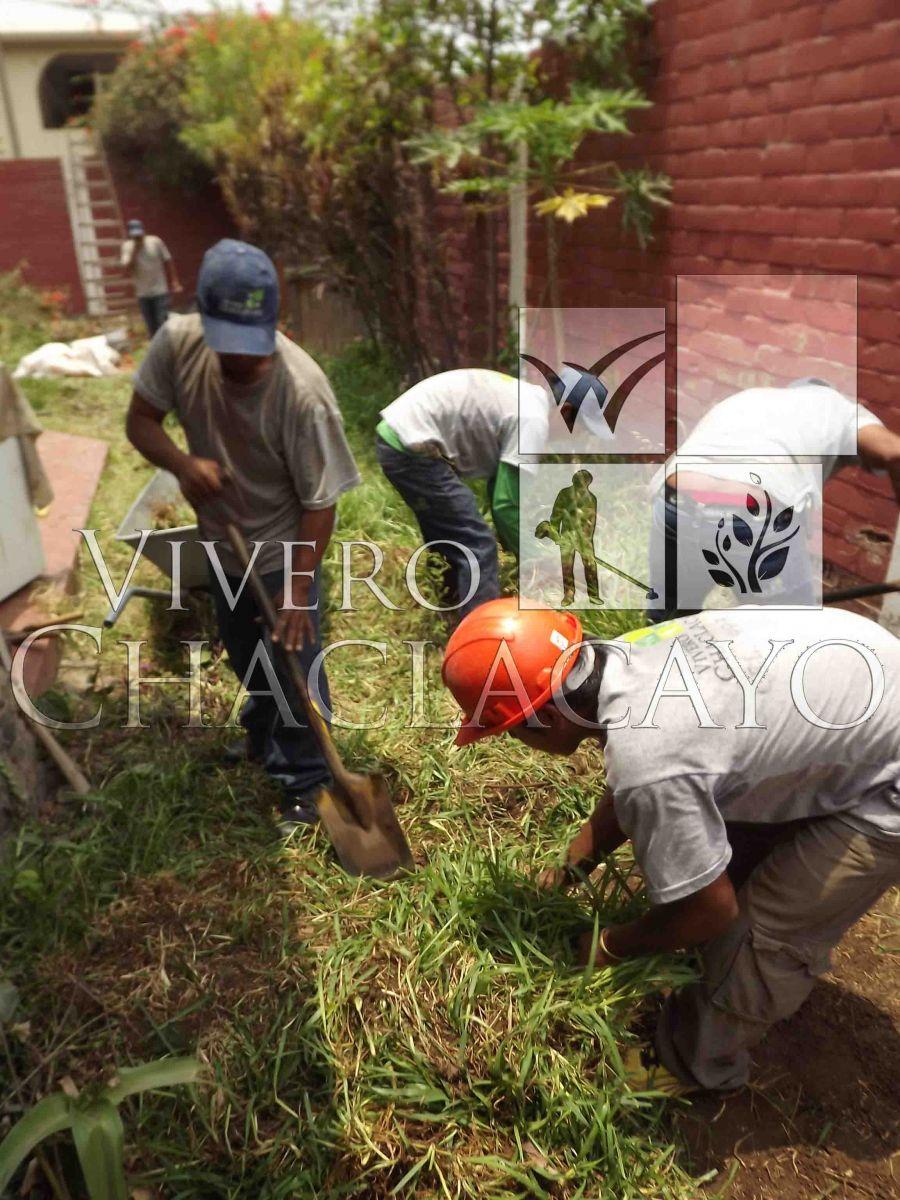 Instalacion de grass y plantas en los girasoles for Viveros en lima